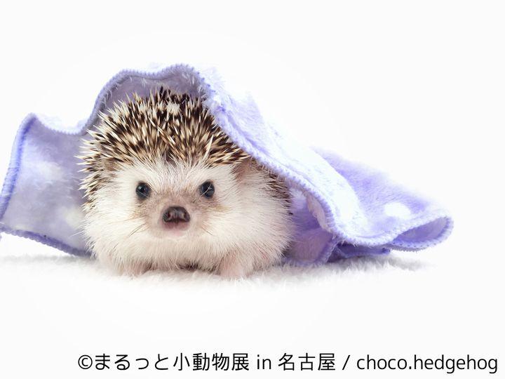 【終了】小動物の合同写真&物販展「まるっと小動物展」ついに名古屋でも開催決定