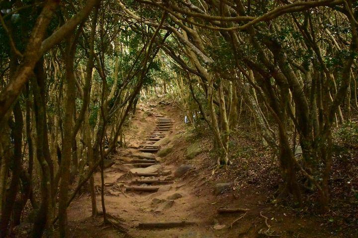 """トトロの森はここにあった!福岡県・糸島の天然アート""""芥屋の大門""""に大興奮"""