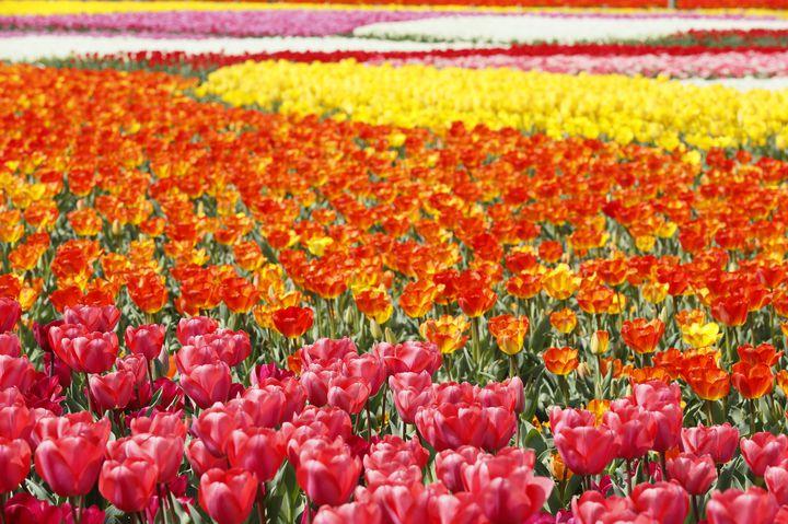 春だからこそ行きたい!西日本のおすすめデートスポット10選