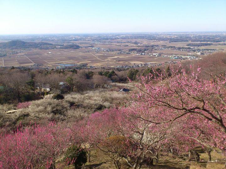 【終了】一足早く春を満喫!茨城・筑波山にて「第45回 筑波山梅まつり」開催