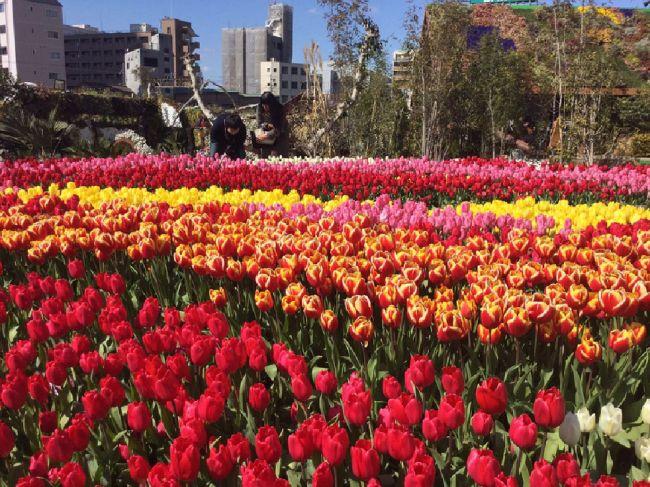 【終了】一足早く、春の訪れを感じよう。大阪で「真冬のチューリップ祭」開催
