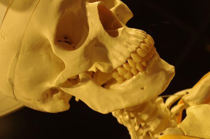 奥深い人体の世界。国立科学博物館にて特別展「人体 ー神秘への挑戦ー」開催