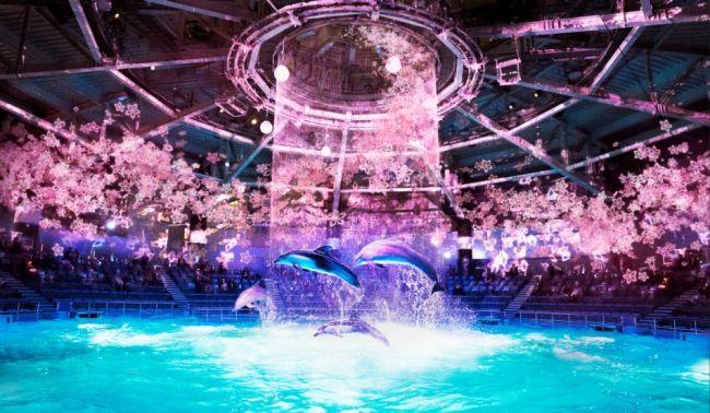 【終了】最先端のお花見を!「SAKURA AQUARIUM by NAKED」品川で開催