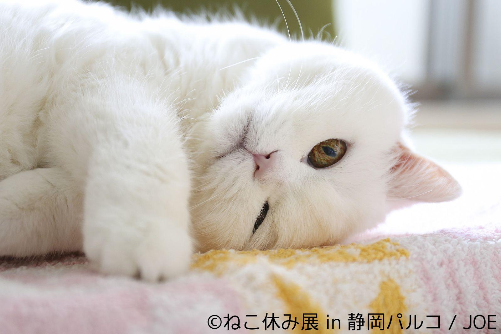 静岡 パルコ 猫 カフェ