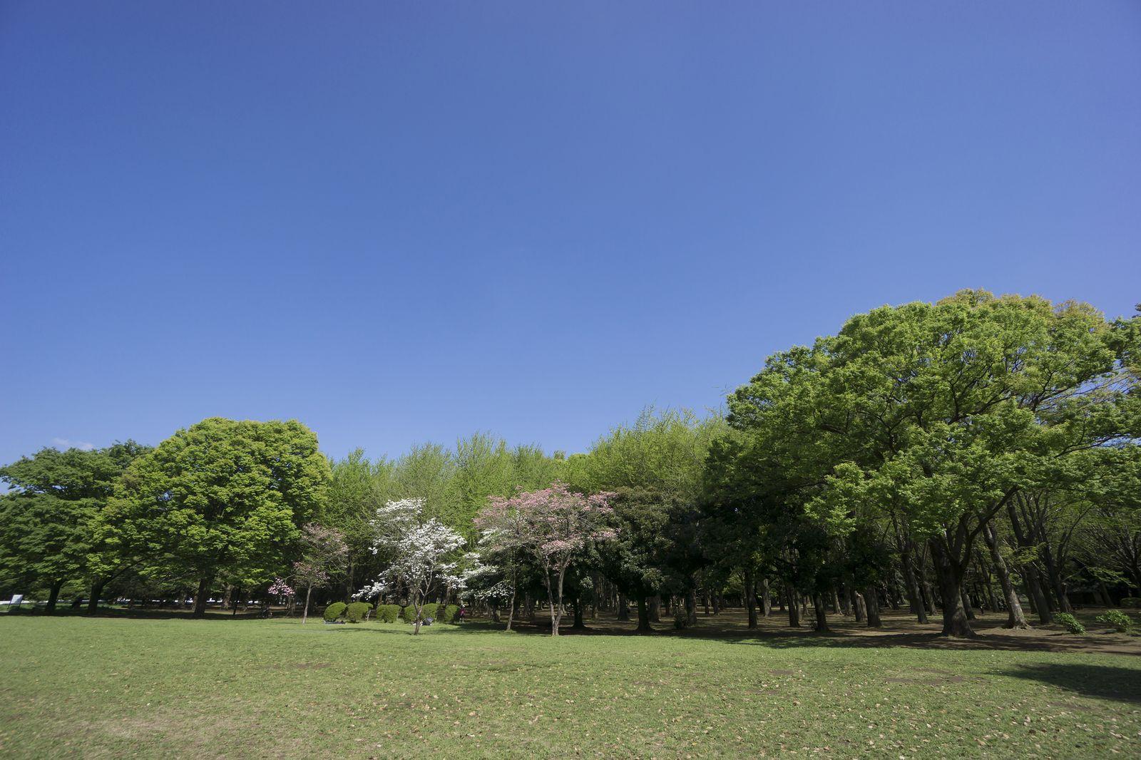 日本文化の発信地!原宿の人気おすすめ観光スポット10選                このまとめ記事の目次