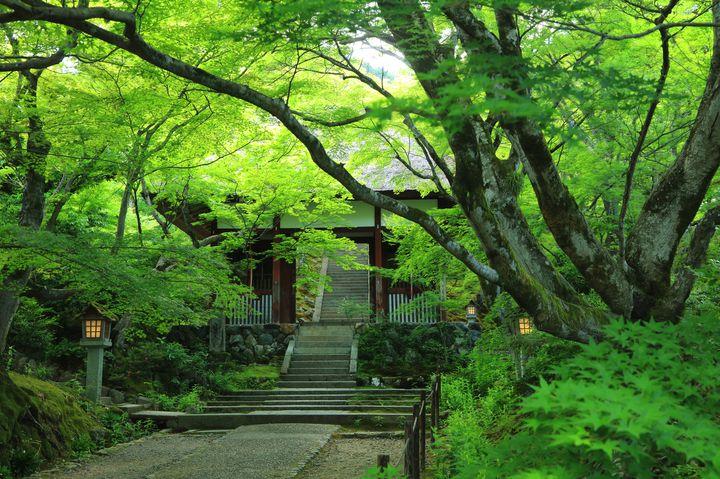 青もみじが美しすぎる!初夏の京都をめぐる1泊2日の週末旅とは