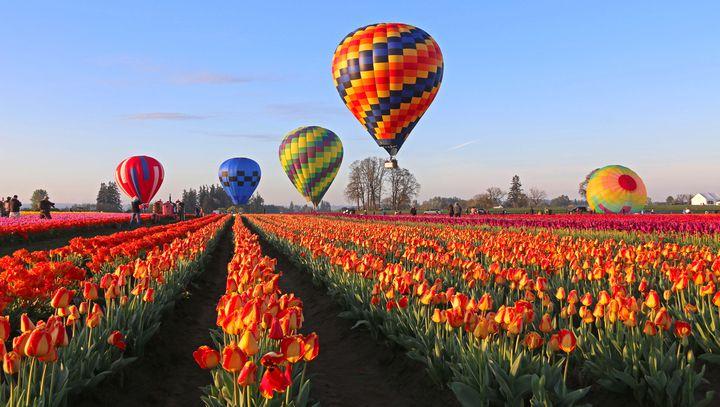 """【今日から】オレゴン州・ウッドバーンにて""""ウッドンシュー・チューリップ・フェスティバル""""開催"""
