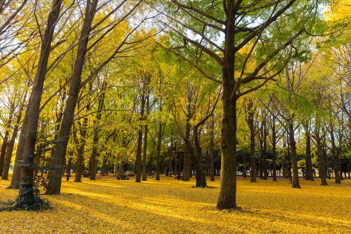 この秋、注目のカフェがある。東京都内の3つのエリアとおすすめカフェまとめ