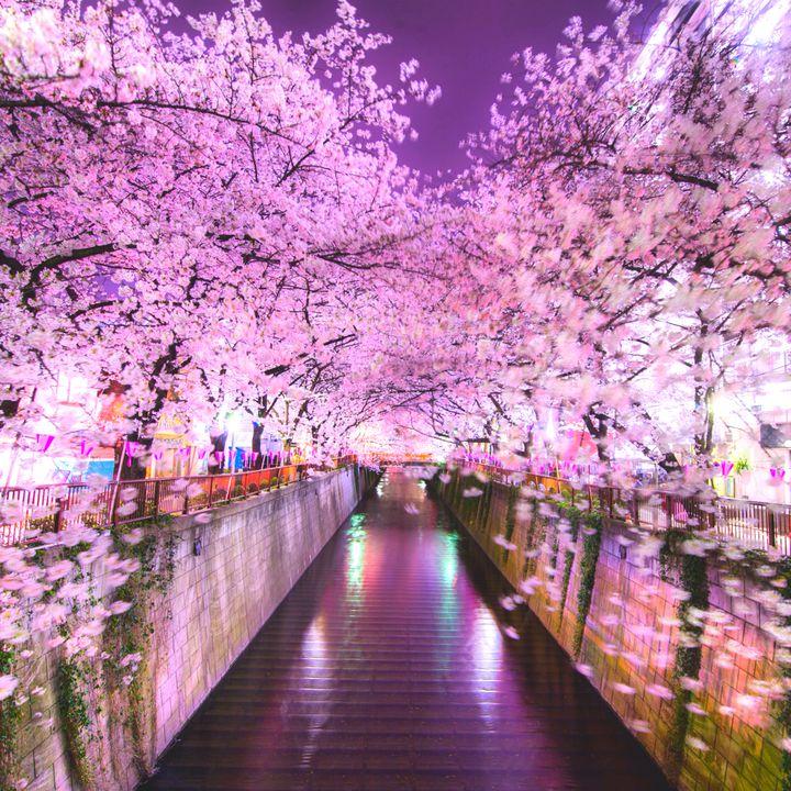 """今年はどこで桜を見ようか。全国の""""今年こそ行きたい桜の名所""""10選はこれだ"""