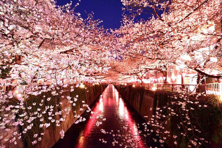 """お花見から夜桜まで。絶景も楽しめる関東の""""梅&桜まつり""""イベントまとめ"""