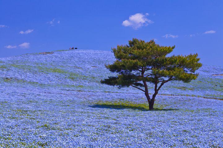 春のお出かけどこ行く?関東で春に友達としたいこと&おすすめスポット9選