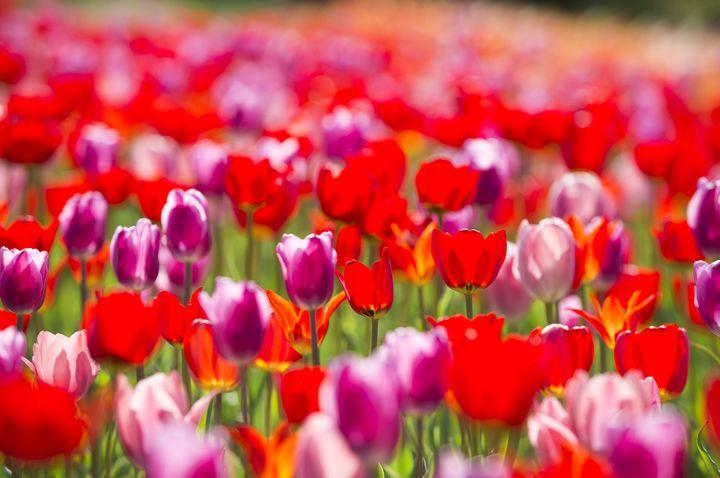 """この春の予定は決まってる?""""関西の4月に行きたいイベント""""まとめ"""