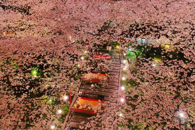 """お花見から夜桜ライトアップまで!東京近郊の""""桜を楽しむイベント""""まとめ"""