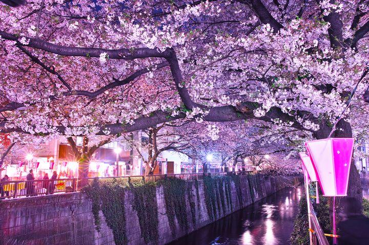 【終了】桜咲く、春うらら。東京都内の今週末に行きたいイベント&スポットまとめ