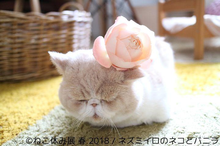 【終了】可愛すぎる猫まみれの祭典!名古屋で「ねこ休み展 春 2018」開催