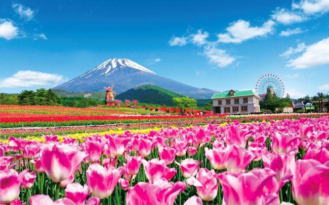 【開催中】雄大な富士と20万本のチューリップ!静岡で「2018天空のチューリップ祭り」開催
