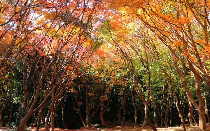 """死ぬまでに一度は行くべき!日本国内で見られる""""秋の絶景""""8選"""