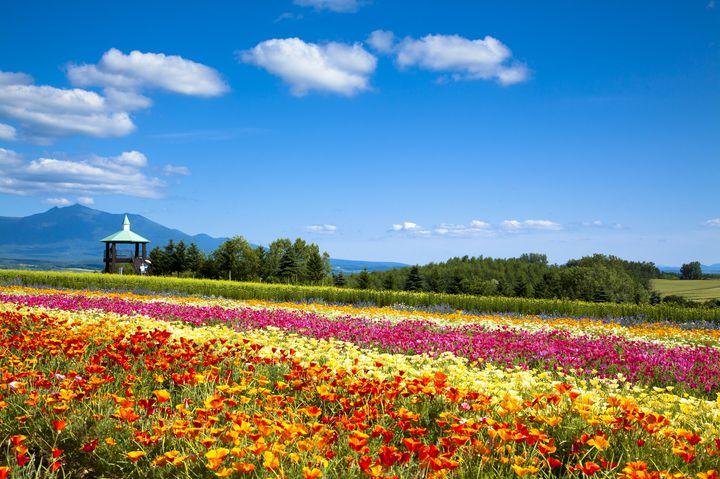北海道旅行でおすすめ!トマム周辺で絶対外せない観光スポット10選