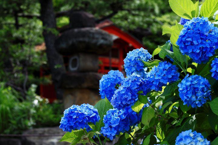 """雨が降るから美しい。東京都内の""""紫陽花が美しい""""スポット10選"""