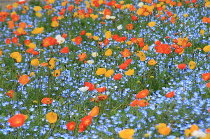 """ドライブにも!春を彩るお花のイベントが満載な""""関東地方の今週したいこと""""7選"""