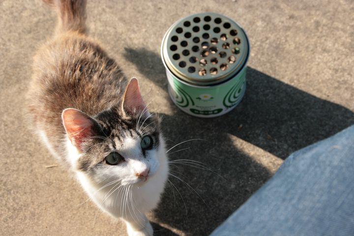 猫好きの聖地!猫に囲まれて過ごす最高の癒し時間。猫だらけの島「田代島」の魅力まとめ