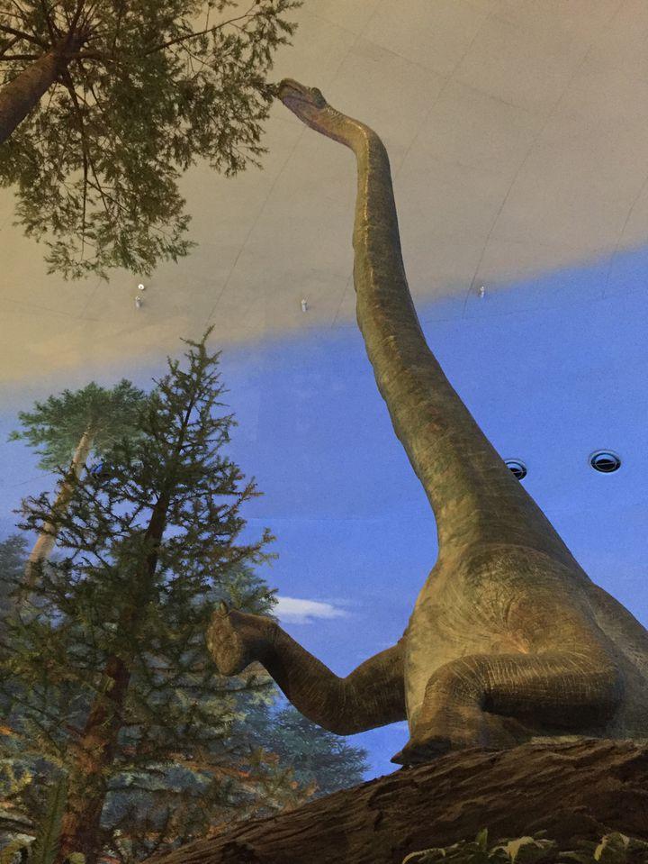 コスパ高すぎ!まるでテーマパークみたいな「福井県立恐竜博物館」