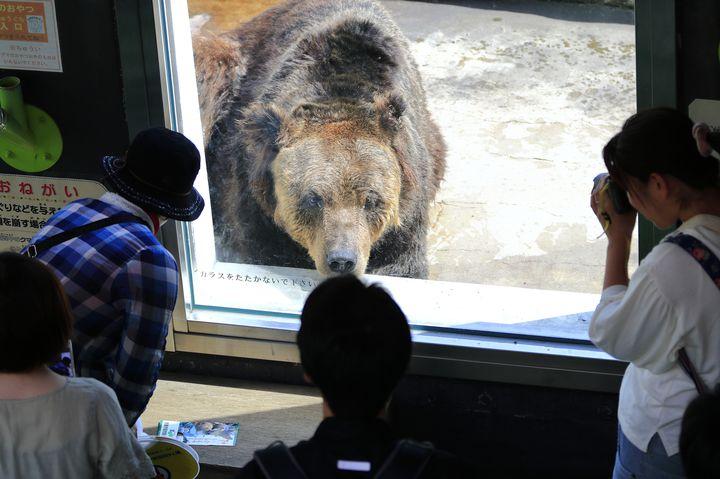 北海道らしさを満喫「釧路市動物園」でしたい5つのこと