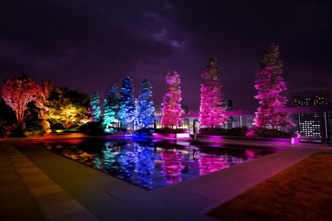 【終了】光のデジタルアートが作る幻想的な世界!銀座「チームラボ 呼応する木々」展示