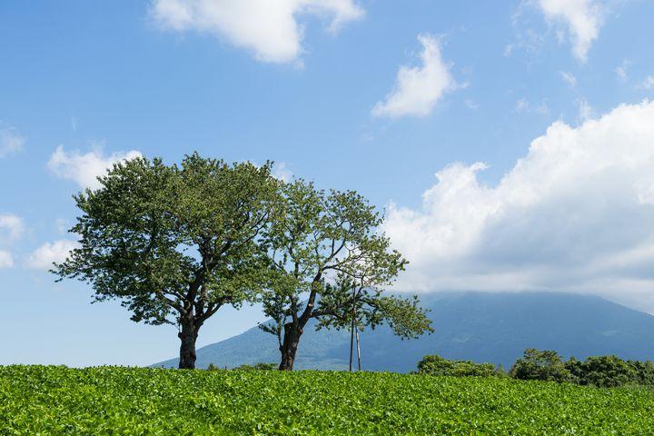 写真映えする羊蹄山ビュースポット!ニセコおすすめ観光10選