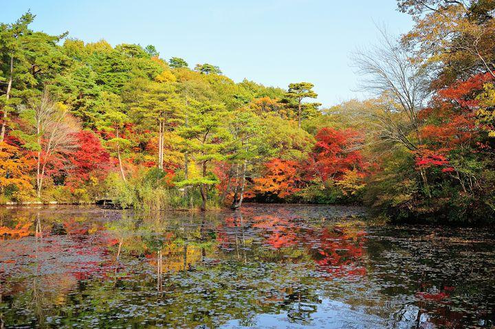 神戸はおしゃれな街並みだけじゃない!この秋訪れたい紅葉名所ランキングTOP5