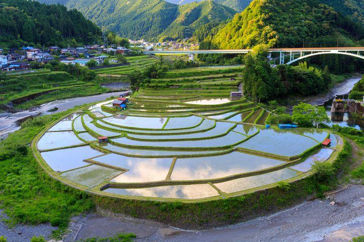 """日本の幻想的""""原風景""""へ。和歌山「あらぎ島」の棚田を見に行きたい"""