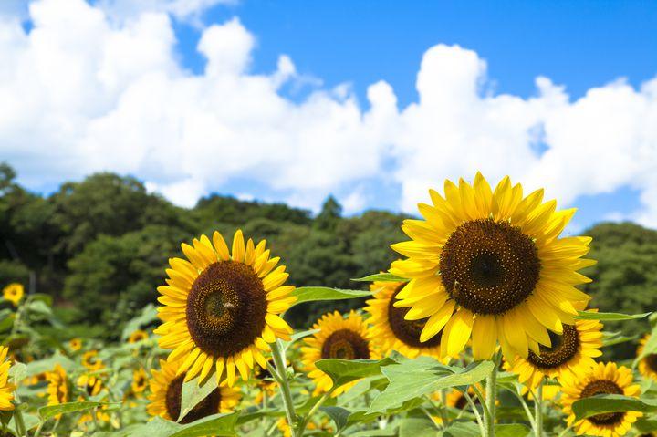 """花、花、花に囲まれて。7月にみたい関東地方の""""花の絶景""""8選はこれだ"""