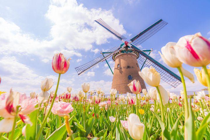 春のお出かけにピッタリ!関東の絶景すぎるお花畑リスト