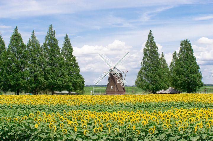 """明日行ける!都内からも近い""""千葉県""""の夏に行きたいおすすめスポットまとめ"""