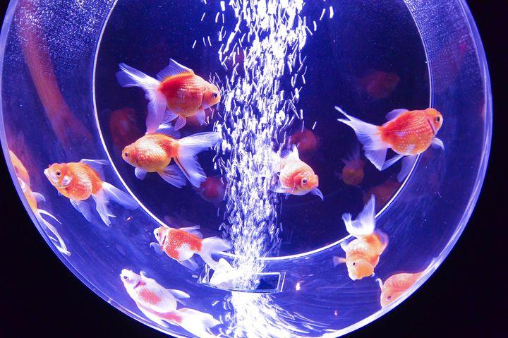 """【終了】カップルでもファミリーでも!""""魚を幻想的に楽しめるアクアリウム""""大阪に登場"""