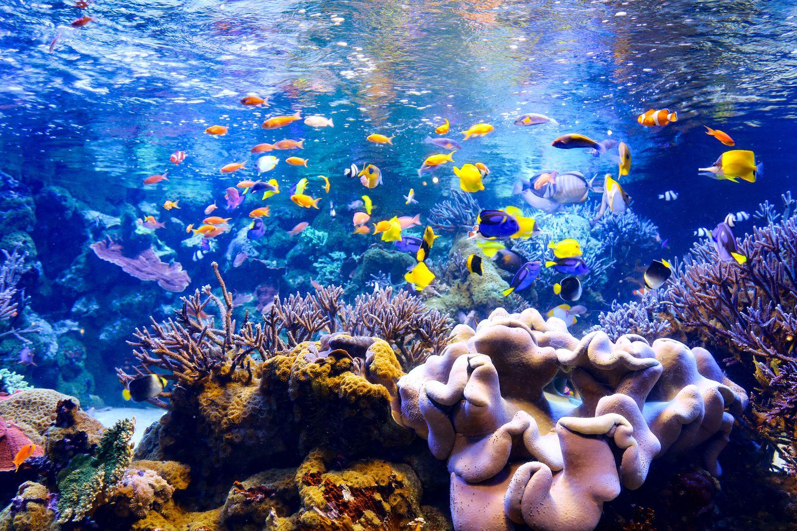 南海 版 海 遊館