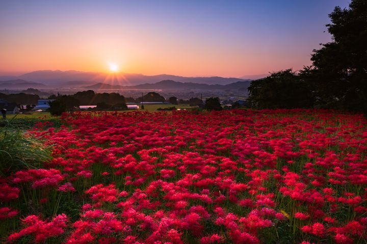 いつもあるわけじゃないから美しい。夏の終わりにしか見られない日本の ...