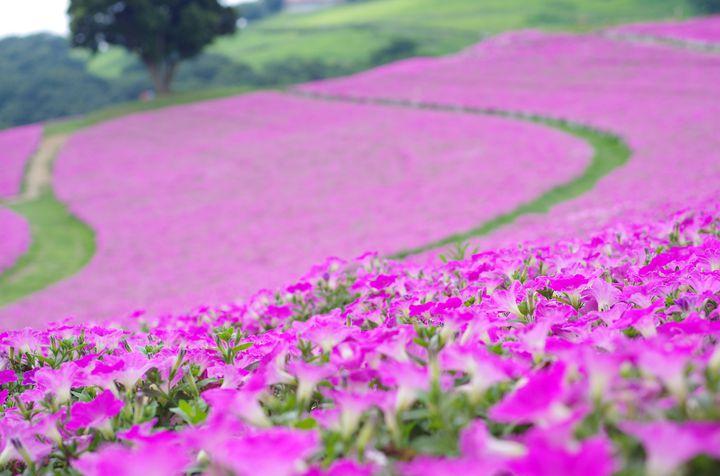 夏の思い出まだ足りない。日帰りで行ける関東近郊の絶景スポット7選
