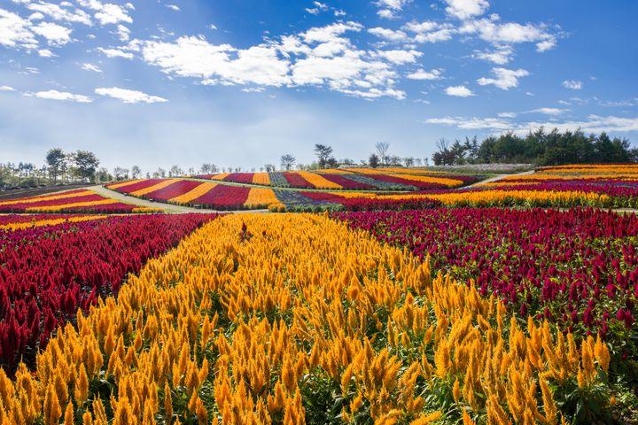 """夏休みのお出かけにおすすめ!日本全国の""""美しい花畑""""を10スポットご紹介"""