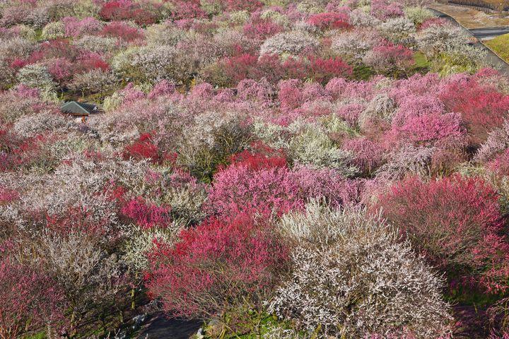 三重県鈴鹿のおすすめ観光スポット7選!遊園地から川遊びまでご紹介