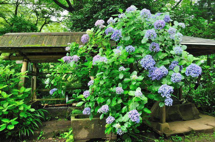【箱根周辺】箱根旅行で訪れたい!自然を感じられる穴場観光スポット5選