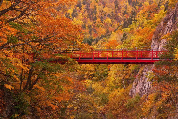 涼しい北の大地に誘われて。「秋の札幌旅行」で行きたい10のスポット