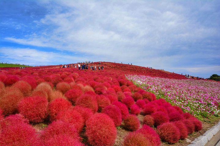 茨城県で風光明媚な景色が楽しめるおすすめドライブスポット7選!