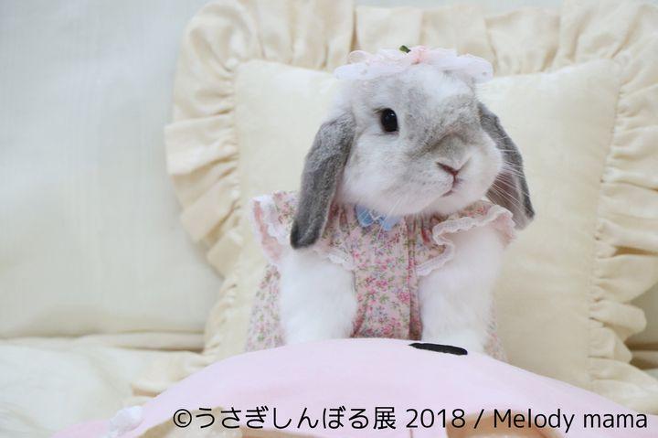 【終了】見ているだけで癒されちゃう!「うさぎしんぼる展」名古屋で開催