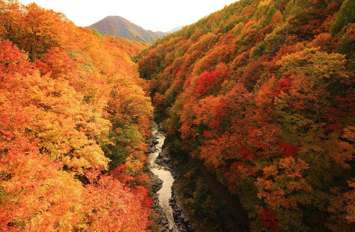 関東近郊でおすすめの紅葉デート7選!愛が深まる紅葉名所をご紹介