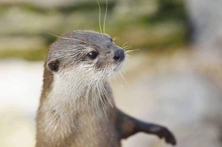 か、かわいすぎる!究極の癒し系カワウソと握手できる全国の水族館ベスト6!