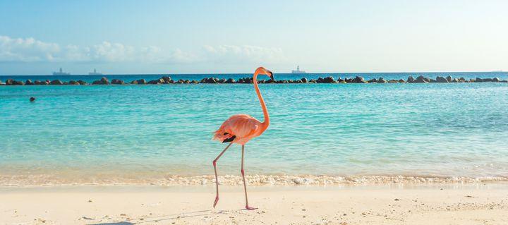 カリブ海に浮かぶ極上の楽園!オランダ・アルバのおすすめ観光スポット7選