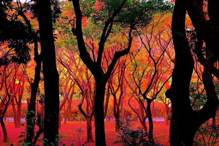 秋を感じる旅に出よう!絶景が楽しめる東京23区内のお散歩デートスポット7選