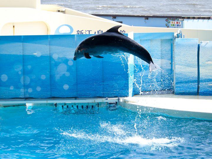 「新江ノ島水族館」でしたい5つのこと!魅力たっぷりの人気水族館で楽しもう