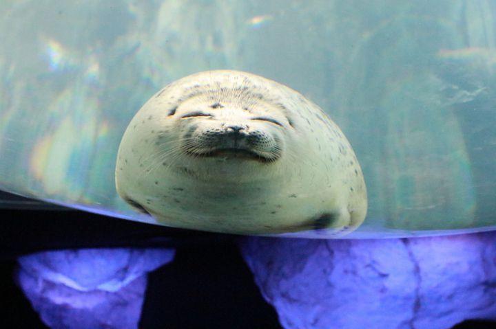幻想的な海の中へ!大阪の巨大水族館「海遊館」でしたいこと5つ